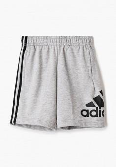 Шорты, adidas, цвет: серый. Артикул: AD002EBHZVB5. Мальчикам / Одежда
