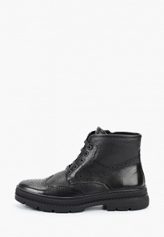 Ботинки, Just Couture, цвет: черный. Артикул: JU663AMFPSL0. Обувь / Ботинки