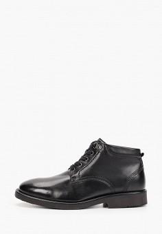 Ботинки, Salamander, цвет: черный. Артикул: SA815AMGIBO8. Обувь / Ботинки / Высокие ботинки