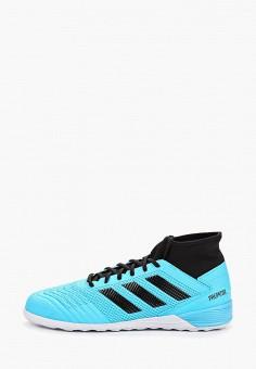 62480cf8 Бутсы зальные, adidas, цвет: голубой. Артикул: AD002AMFKBI1. Обувь /  Кроссовки