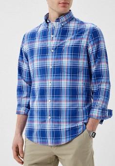 e9fe1ddccc276 Рубашка, Izod, цвет: голубой. Артикул: IZ003EMELBD6. Одежда / Рубашки