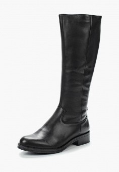 Сапоги, Accord, цвет: черный. Артикул: AC009AWVIA29. Обувь