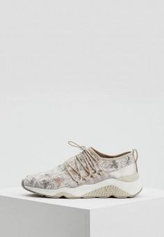 Кроссовки, Ash, цвет: бежевый. Артикул: AS069AWAAJT3. Обувь / Кроссовки и кеды / Кроссовки