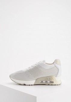 Кроссовки, Ash, цвет: серый. Артикул: AS069AWAAJT8. Обувь / Кроссовки и кеды / Кроссовки