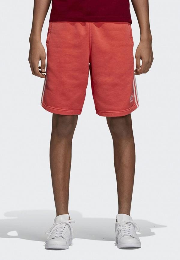 Шорты спортивные adidas Originals adidas Originals AD093EMCCZA5