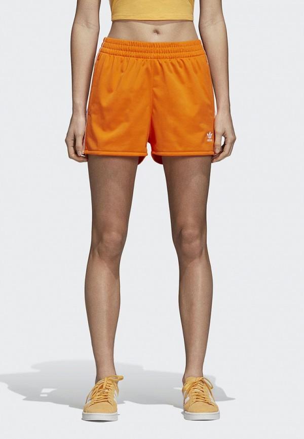 Шорты спортивные adidas Originals adidas Originals AD093EWCCZF0