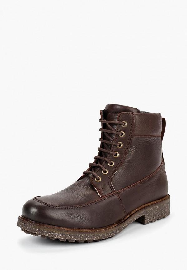 Купить Ботинки Storm, st891amfrz33, коричневый, Осень-зима 2018/2019