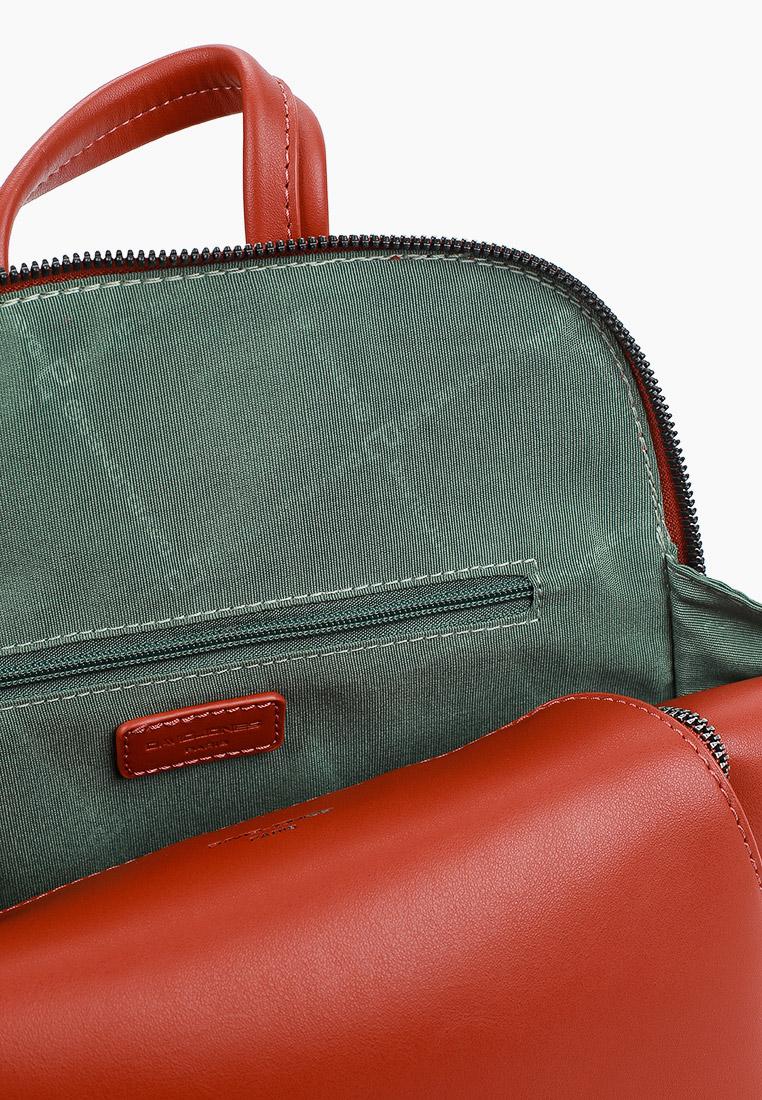 Городской рюкзак David Jones (Дэвид Джонс) CM6031_охра: изображение 3