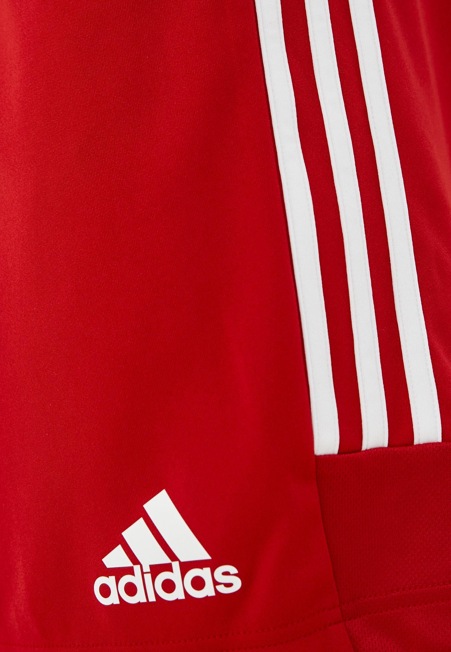 Мужские спортивные шорты Adidas (Адидас) GT8801: изображение 4